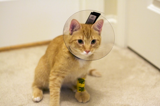 Kitten in a Cone